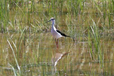 Udruga Biom i PP Vransko jezero pozivaju na trening prepoznavanja ptica