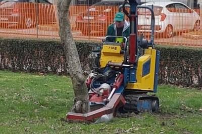 'Majstor' vadi magnoliju