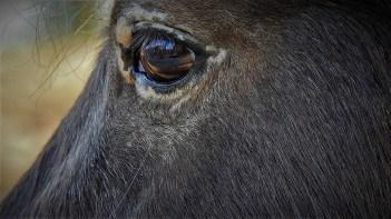 Oko konja (foto TRIS/G. Šimac)
