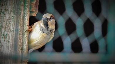 Ptica (foto TRIS/G. Šimac)