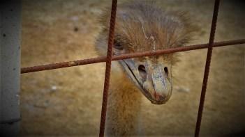 Noj u žici - (foto TRIS/G. Šimac)