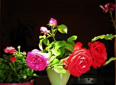 Ruža, delikatna, lijepa i trnovita (foto Tris)