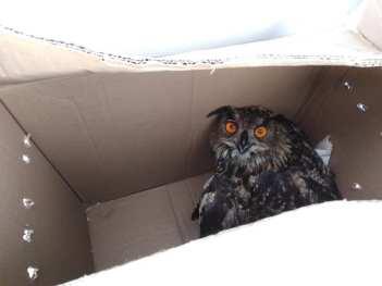 Na kraju se našla u kutiji...