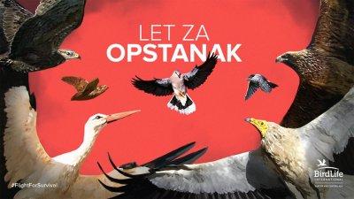 "Reality ""show""-Let za opstanak: Divlje grlice, rode, prepelice, orlovi…na nišanu krivolovaca"