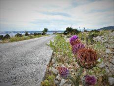Biljni svijet (foto TRIS/G. Šimac)