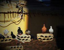 Obitelj goluba u pustinskoj razvalini (foto TRIS/G. ŠIMAC)