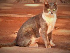 Maca crvena od pijeska (foto TRIS/G. ŠIMAC)