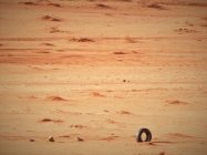 Guma u pustinji (foto TRIS/G. ŠIMAC)