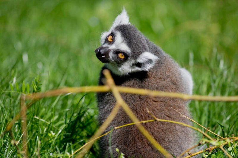 Tris Portal Sibenik Zg Zoo Casti Na Dan Zena Besplatan Ulaz Zenama