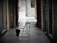 Crni mačak je jedini prolaznik (foto TRIS/G. Šimac)