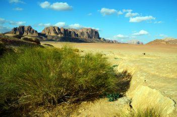 Brnistra, jedna od rijetkih biljaka što preživljava u pustinji (foto Joso Gracin)