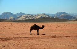 Deva u slobodi Wadi Ruma (foto Joso Gracin)