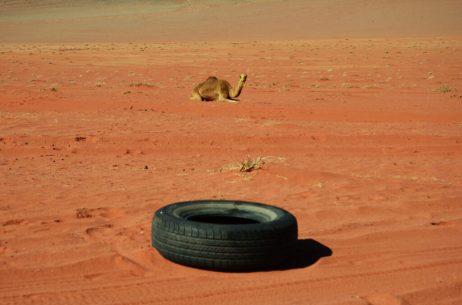 Dva ukrasa pustinje, deva i odbačena guma beduinskog terenca (foto Joso Gracin)