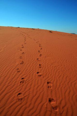 Tragovi u pijesku (foto Joso Gracin)