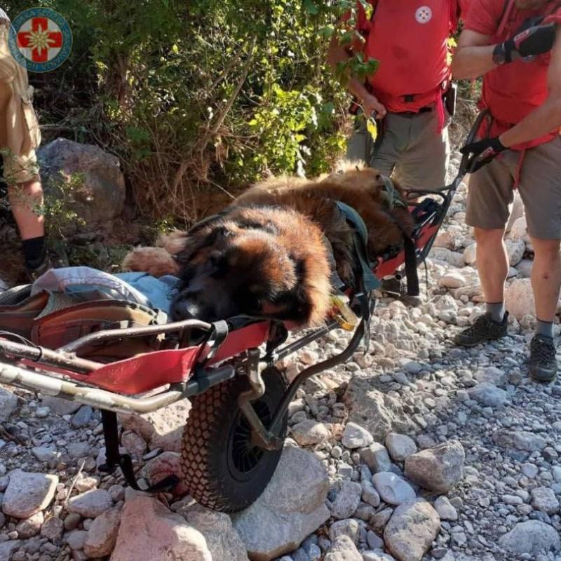 Pas dočekao spas: HGSS na nosilima spustio psa koji se na Paklenici 'umorio ko pas'