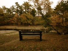 A Fall scene in a local park.