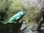 Green lizard.