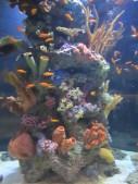 Vancouver aquarium aquarium.