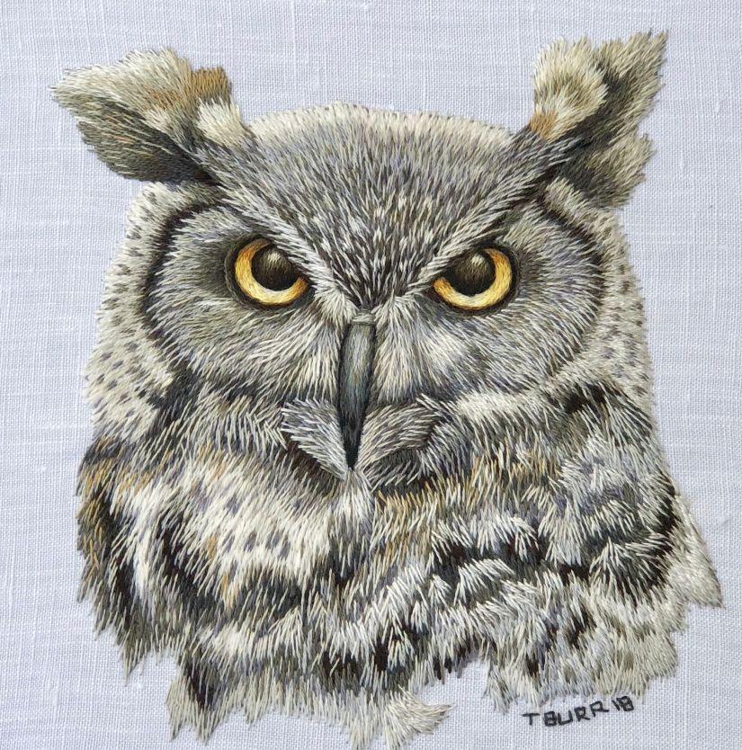 owl 4