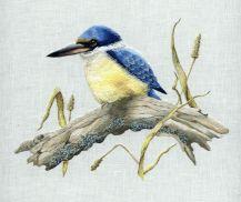 Australian Sacred Kingfisher
