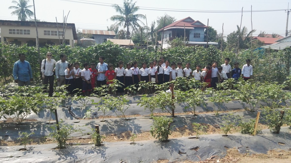 School vegetable gardens - How To Change Lives With School Vegetable Gardens