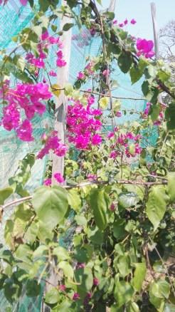 Attractor Pollinator