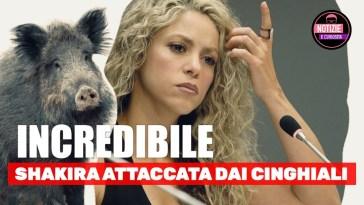 INCREDIBILE, Shakira ATTACCATA DAI CINGHIALI a Barcellona…