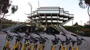 Yellow OFO Bikes in front of Geisel Library. Photo courtesy of DP Li.