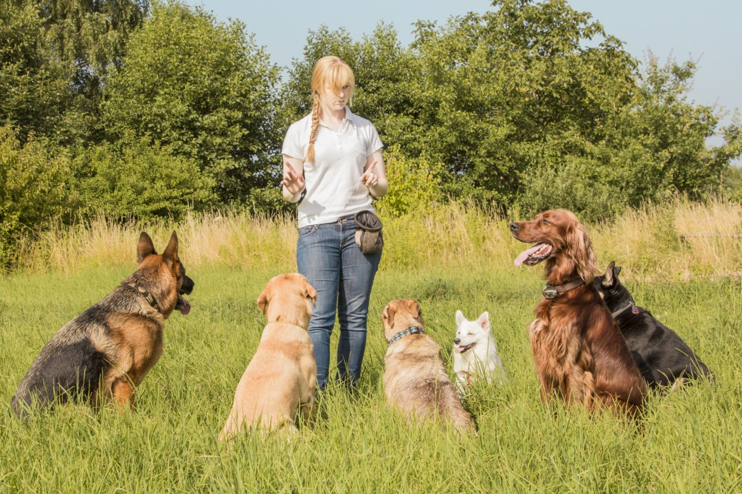 Dog Training Group Class