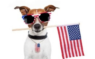 Triumphant Canine – Fourth of July Dog Tips