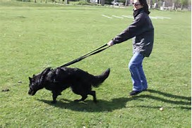 Leash Pulling Dog Training
