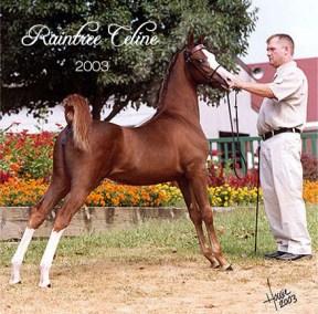 2003 Raintree Celine
