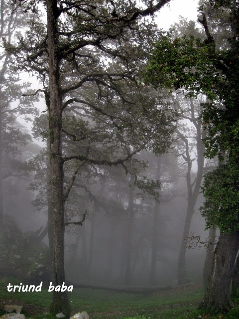 The Woods and The fog