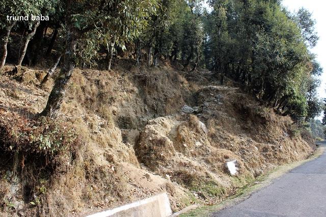 Bir Billing Jungle Trail 6