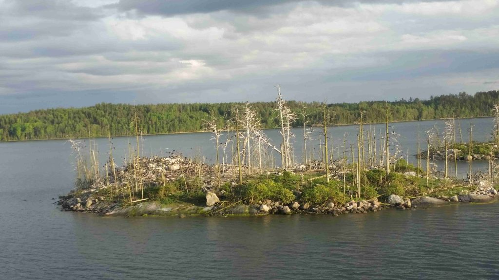 Sweden - isle vegetation distroyed by birds