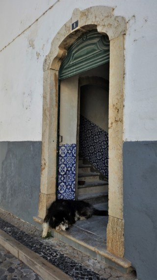 Faro old town dog in front of moorish house