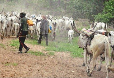 Pastor, 50 others killed by Fulani Herdsmen in Taraba