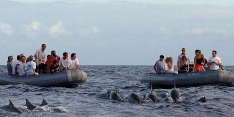 Why Let Kauai Sea Tours' Crew Navigate Your Adventure?, Kekaha-Waimea, Hawaii
