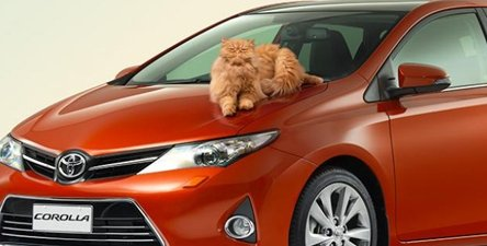 toyota_corolla_cat_main