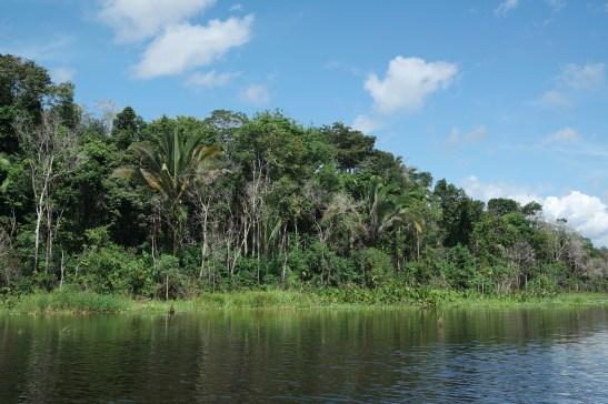 Trocano Araretama Forest 4