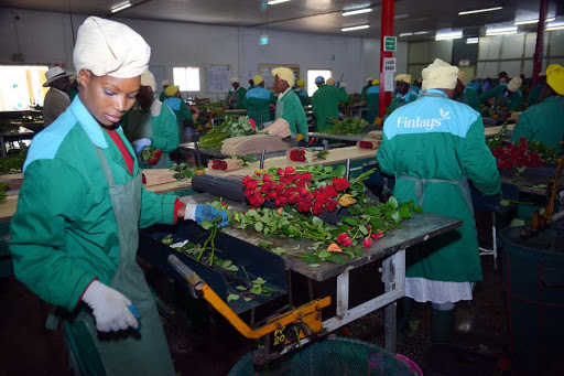 Kenya's Horticulture Exports Rise To $1.37bn In 2020