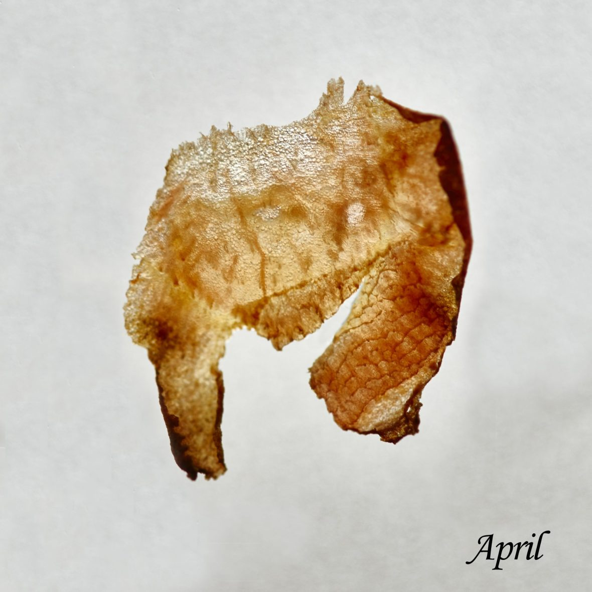Djebali's Once A Month Project – April