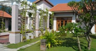 Cây cảnh tạo môi trường trong lành cho ngôi nhà