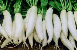 Hướng dẫn cách trồng củ cải trắng