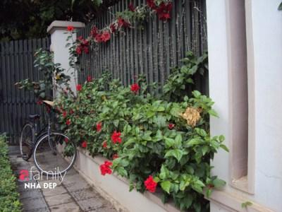 Hoa dâm bụt sắc đỏ…