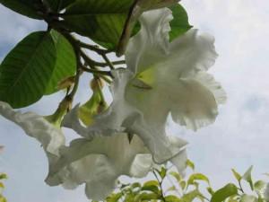 Màu trắng tinh khôi ấn tượng , có mùi thơm nhẹ