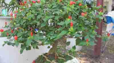hoa kiểng ghép