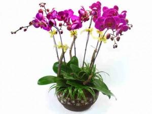 chăm sóc cây hoa lan sau Tết