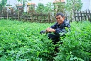 cách trồng rau bồ ngót