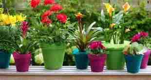 Sáu kinh nghiệm chăm sóc vườn tại nhà